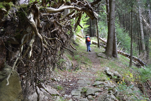 Walking & roots