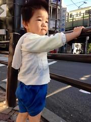 りりしいとらちゃん (2012/10/8)