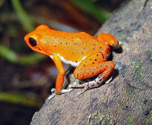 sex xx Frog