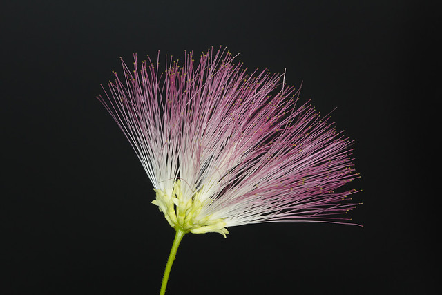 Flower from a local tree
