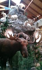 moose_mountain