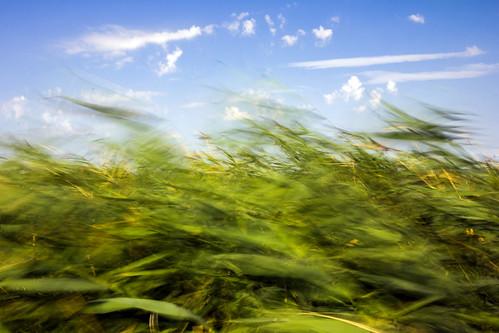 cloud reed nature landscape hungary wideangle természet balaton felhő magyarország tájkép balatonfenyves nád nagylátószög