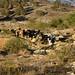 Woman and animals returning home - Mujer y sus animales regresando a la casa en la vereda hacia San Juan Diuxi, Región Mixteca, Oaxaca, Mexico por Lon&Queta