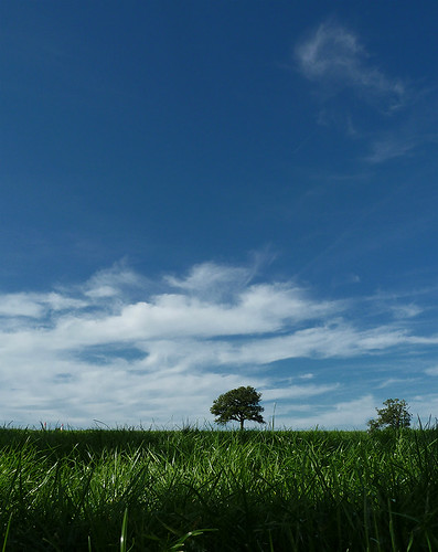 blue summer sky tree grass clouds insect