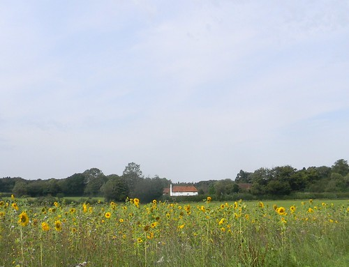 Sunflowers with cottage