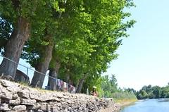 Giant Riverside Trees