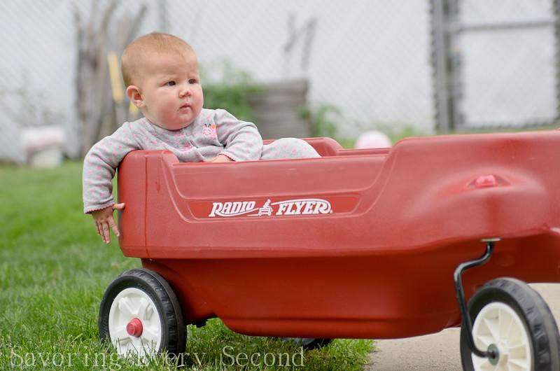 Wagon Rides-011.jpg