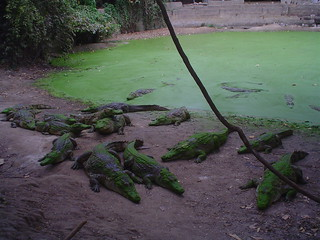Kachikally Museum e Crocodile Pool em Bakau
