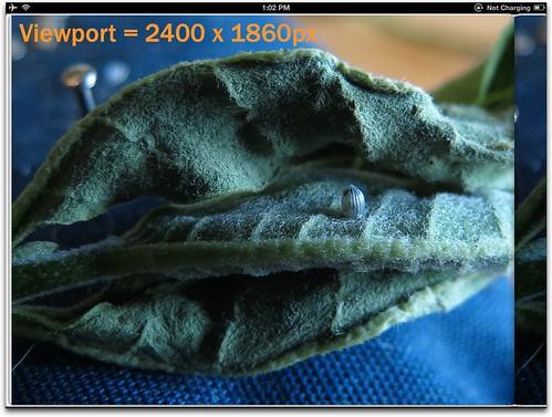Viewport 2400x1860