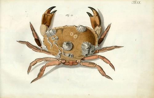 003-Â Versuch einer Naturgeschichte der Krabben und Krebse- 1790- Johann Friedrich Wilhelm Herbst- Humboldt University