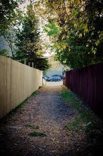 Fall Laneway