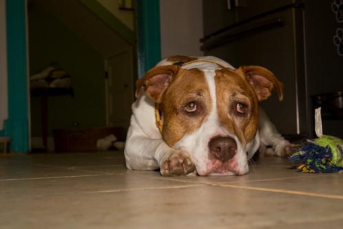 Svoboda_Senior Dog_006