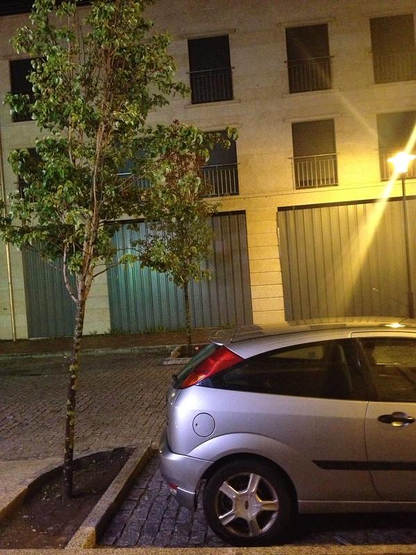 Árbol & coche