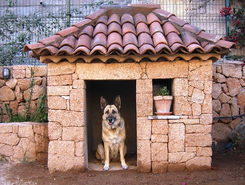German Shepherd at home - Perla by perlaroques