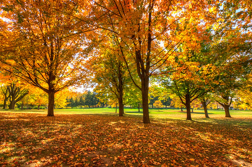 Twining Park - Fall Colors