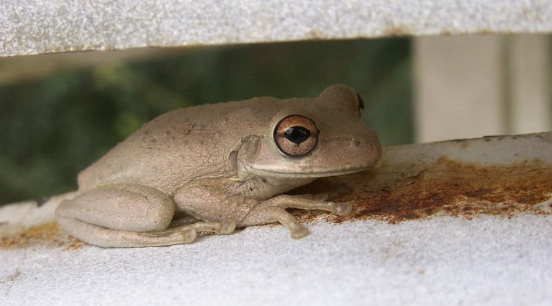 how to get rid of tree frogs around my pool