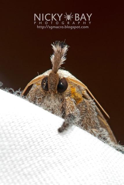 Moth - DSC_5456