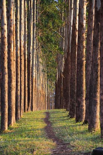 trees sunset canon atardecer eos colombia jose 5d eucalyptus arboleda markiii popayán ef24105mmf4lisusm platinumheartawar flickraward5 josémarboledac blinkagain canon5dm3