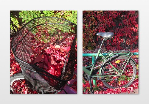bikes in autumn by Anna Amnell