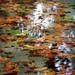 ...:: si sta come d'autunno sugli alberi le foglie... ::.... by kikila46