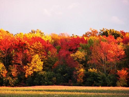 autumn fallcolors