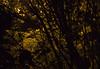 Nightlight by wenjuk