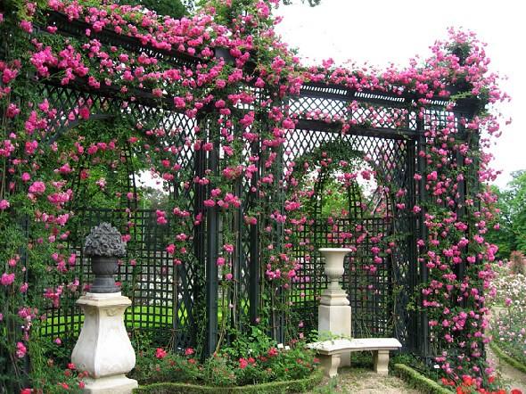 tu thiet ke gian cho hoa hong leo (2)