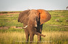 Elephant_murchison Falls