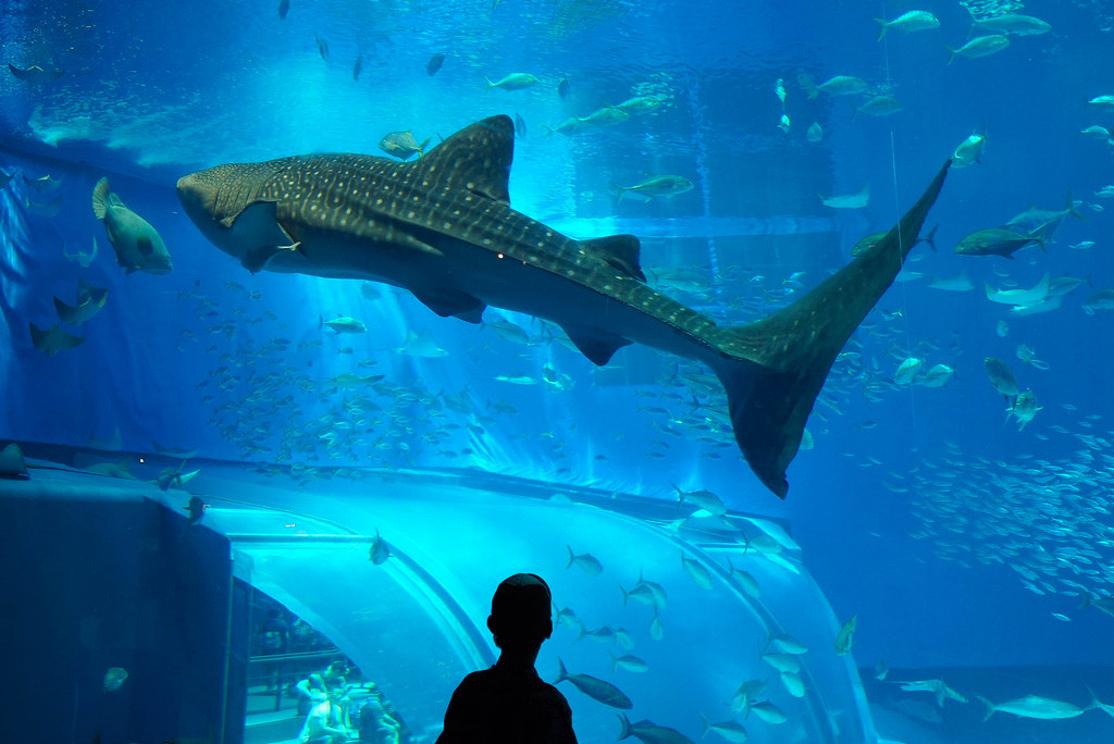 美ら海水族館DSC04620