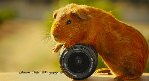 He love's Nikon !!  #Flickr12Days