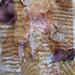 susi bancroft quilt fragment