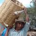 Desgranado maíz; Santo Domingo Yanhuitlán (Región Mixteca), Oaxaca, Mexico por Lon&Queta