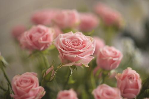 flowers;