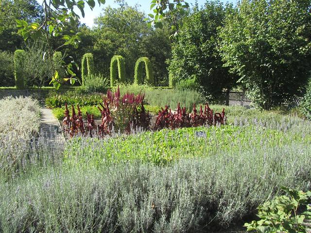 jardins plantas rasteiras:Chamerolles
