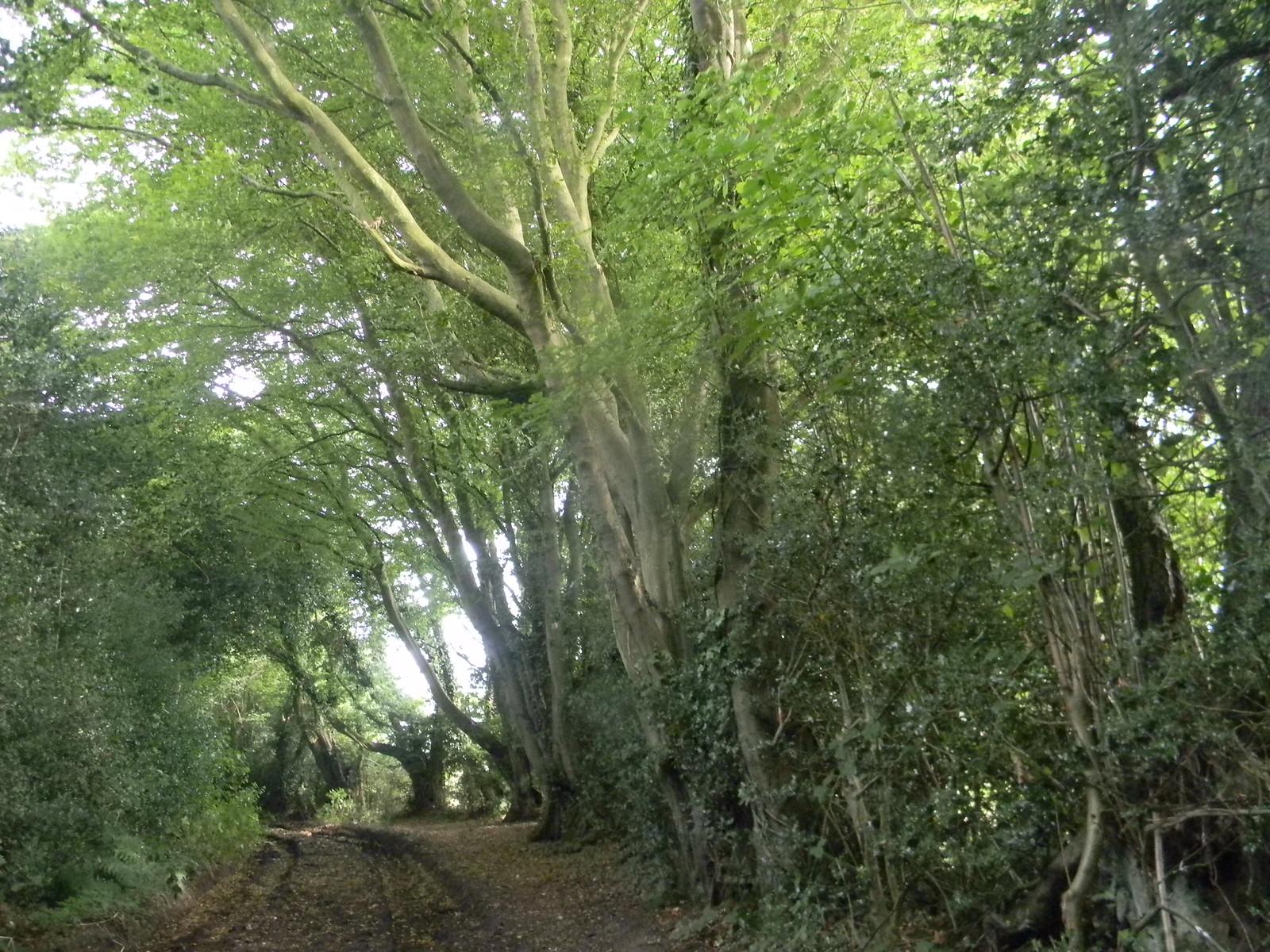 Bridleway Chesham to Great Missenden