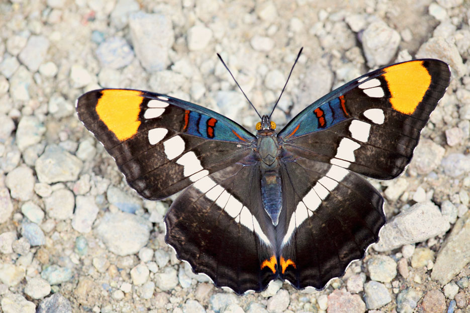 090312_02_butterfly_californiaSister