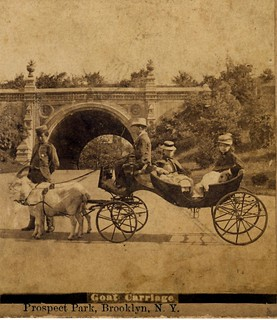1870s fun in a Goat Carriage, Prospect Park, Brooklyn, New York