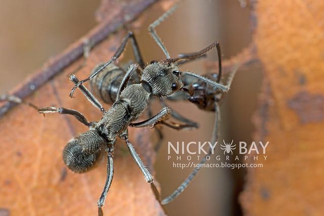 Ants - DSC_3610