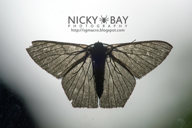 Moth - DSC_0078