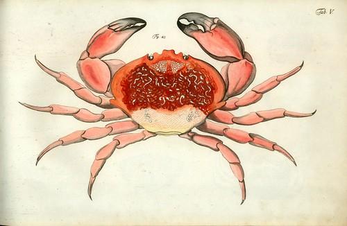 002-Â Versuch einer Naturgeschichte der Krabben und Krebse- 1790- Johann Friedrich Wilhelm Herbst- Humboldt University