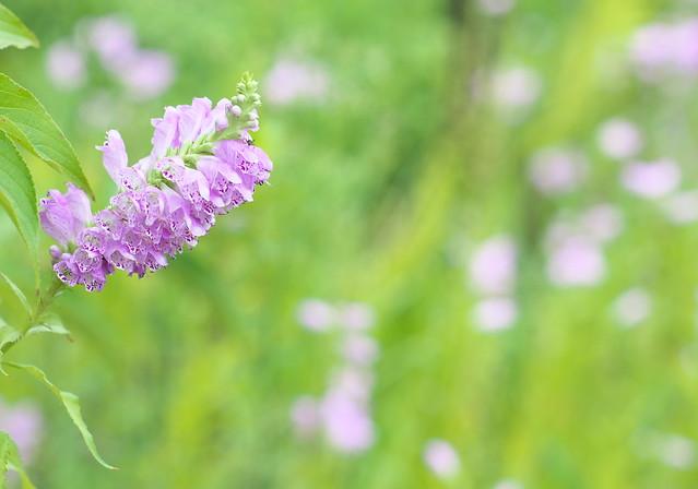 Flower Vista