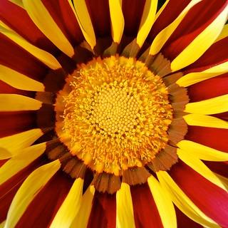 Simetría de la madre natura