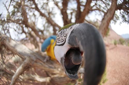 A Parrot Biting