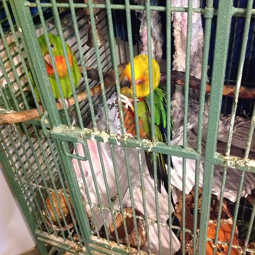 Da birds who need their cage cleaned