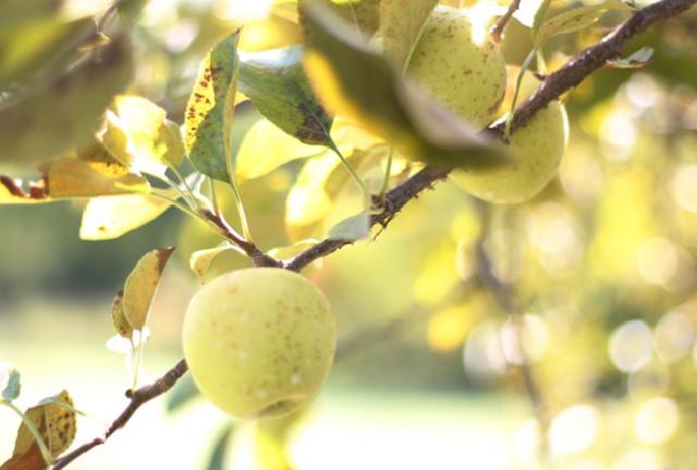 Apple   FoodLovesWriting.com