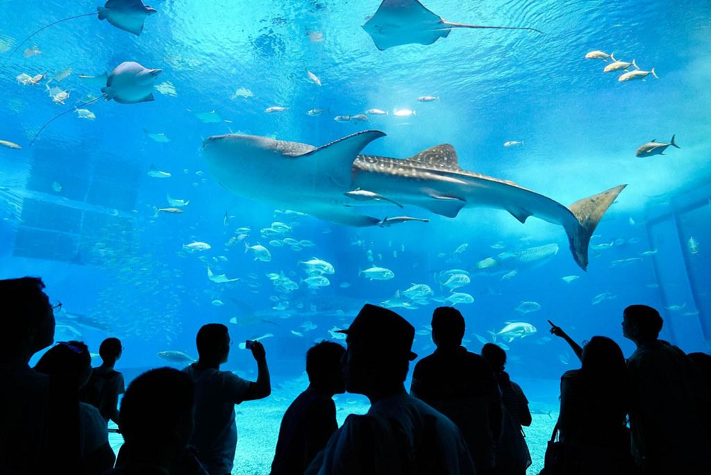 美ら海水族館DSC04589