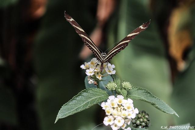 Flutter Pt.2