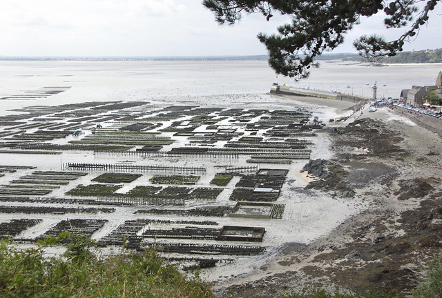 Oyster beds - Cancale