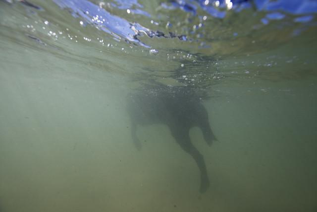 uw doggy paddle