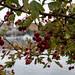 Photo Walk 2012-1355.jpg